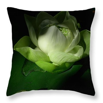 White Lotus Unfolding Throw Pillow