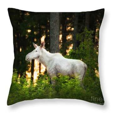 Throw Pillow featuring the photograph White Moose In Sunset by Rose-Maries Pictures