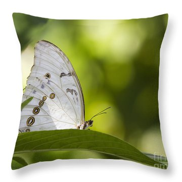 White Morpho   Throw Pillow by Anne Rodkin