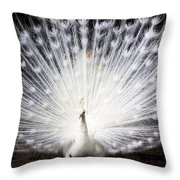 White Peacock Throw Pillow by Daniel Precht