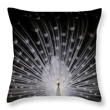 White Peacock In Full Display Throw Pillow by Myrna Bradshaw
