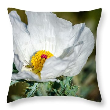 White Prickly Poppy Wildflower Throw Pillow by Debra Martz