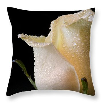 White Rose Close-up Throw Pillow