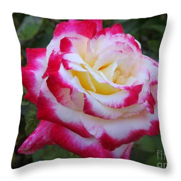 White Rose With Pink Texture Hybrid Throw Pillow