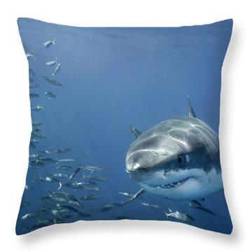 b74e9bd9f439 The Great White Shark Throw Pillows