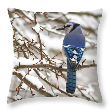 White Snows Blue Jay Throw Pillow