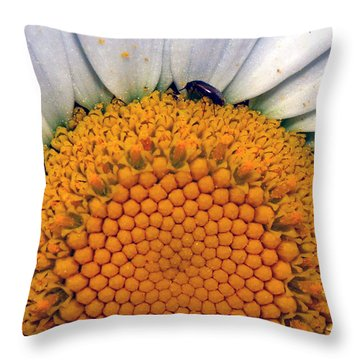 Throw Pillow featuring the photograph White Sunflower by Tarey Potter