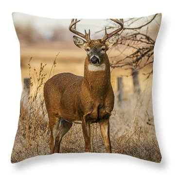 White-tail Buck Throw Pillow by Rob Graham