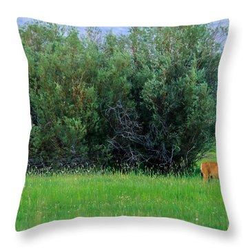 White-tail Bucks Throw Pillow