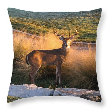 White Tail Throw Pillow