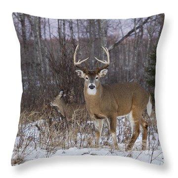 White-tailed Buck & Doe Throw Pillow