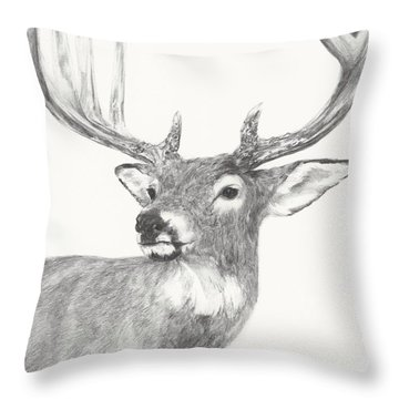 White Tailed Buck Study Throw Pillow by Meagan  Visser