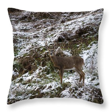 White Tailed Deer Almost Perfect Camouflage  Throw Pillow
