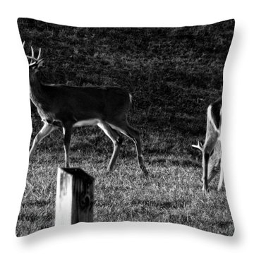 White Tailed Deer Throw Pillow by Chris Flees