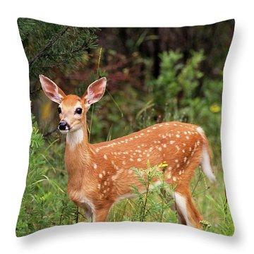 White-tailed Deer Fawn Odocoileus Throw Pillow
