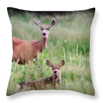 White-tailed Fawn Throw Pillow