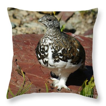 White-tailed Ptarmigan Throw Pillow