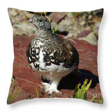 White-tailed Ptarmigan Throw Pillow