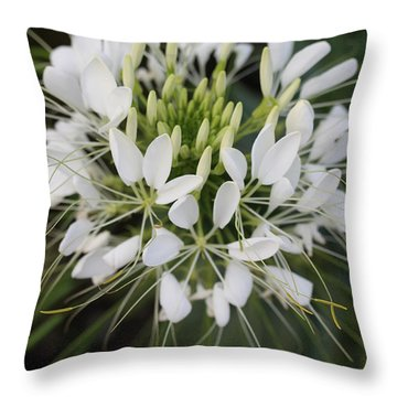 White Tenderness Throw Pillow by Christiane Schulze Art And Photography