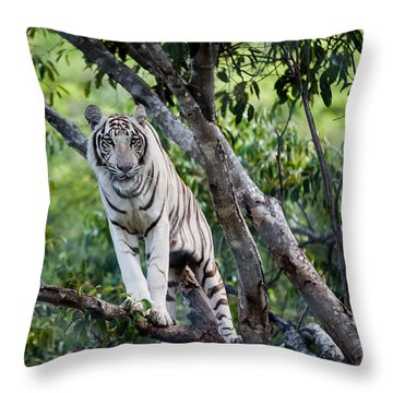 White Tiger On The Tree Throw Pillow by Jenny Rainbow