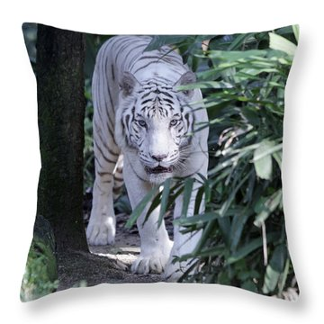 Throw Pillow featuring the photograph White Tiger  by Shoal Hollingsworth