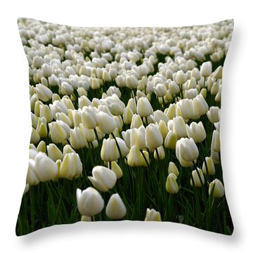 Throw Pillow featuring the photograph White Tulip Field  by Luc Van de Steeg