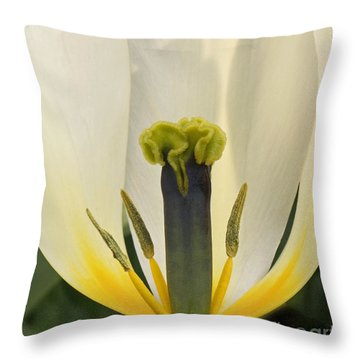 Throw Pillow featuring the photograph White Tulip by Inge Riis McDonald