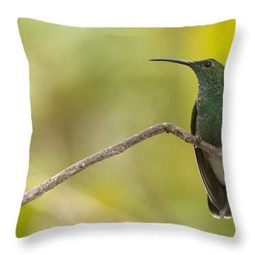 White-vented Plumeleteer Throw Pillow