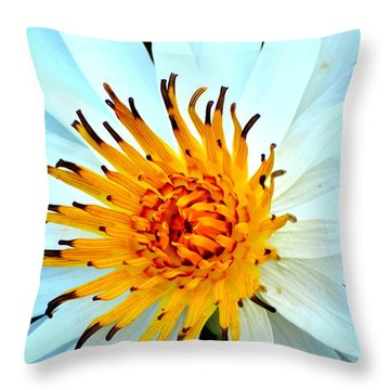 White Water Lilly II Throw Pillow by Jodi Terracina