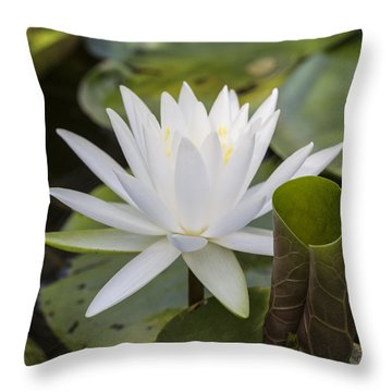 White Water Lily With Curiously Scrolled Leaf Throw Pillow