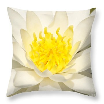 Throw Pillow featuring the photograph White Waterlily by Olivia Hardwicke