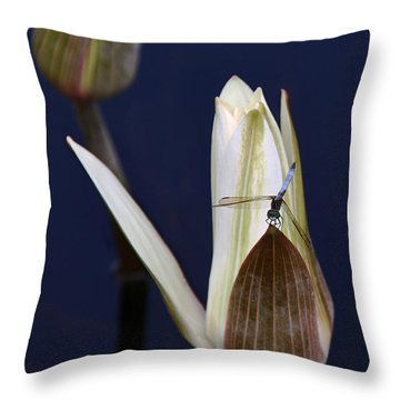 Under Careful Inspection Throw Pillow by Yvonne Wright