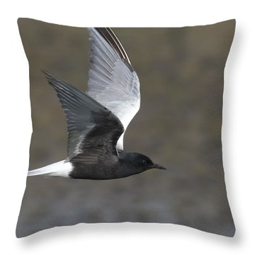 White-winged Tern Throw Pillow