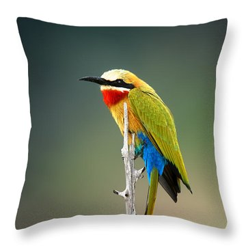 Whitefronted Bee-eater Throw Pillow by Johan Swanepoel