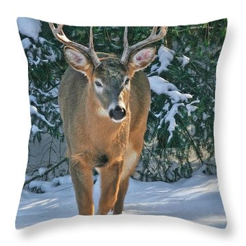 Whitetail Deer Eight Point Throw Pillow
