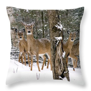 Whitetail Deer Odocoileus Virginianus Throw Pillow by Gregory K Scott