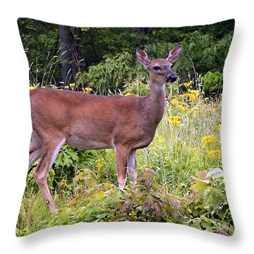 Whitetail Deer Throw Pillow by William Tanneberger