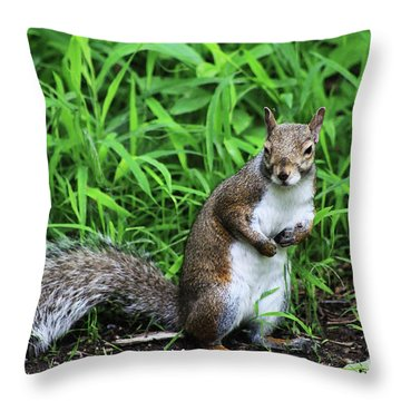 Who Me Throw Pillow by Alyce Taylor