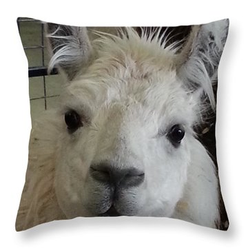 Throw Pillow featuring the photograph Who Me Llama by Caryl J Bohn