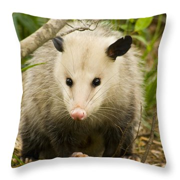 Who Says Possums Are Ugly Throw Pillow