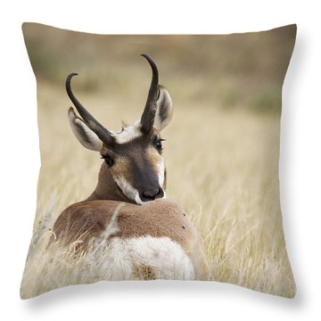 Who You Looking At Throw Pillow