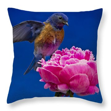 Whoaa Throw Pillow by Jean Noren