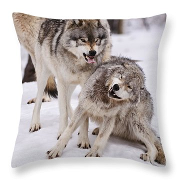 Throw Pillow featuring the photograph Who's The Boss by Wolves Only