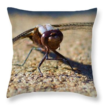 Why Hello There Little Fella Throw Pillow by Dacia Doroff