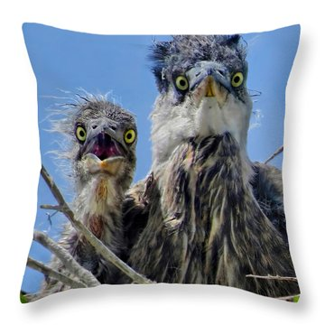 Wide Eyed Baby Herons Throw Pillow by Jennie Breeze
