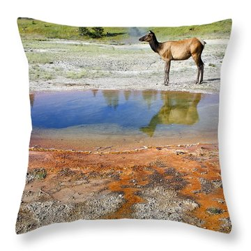 Wild And Free In Yellowstone Throw Pillow by Teresa Zieba