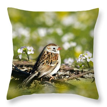 Wild Birds - Field Sparrow Throw Pillow by Christina Rollo