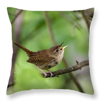 Wild Birds - House Wren Throw Pillow by Christina Rollo