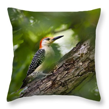 Red Bellied Woodpecker Throw Pillow by Christina Rollo