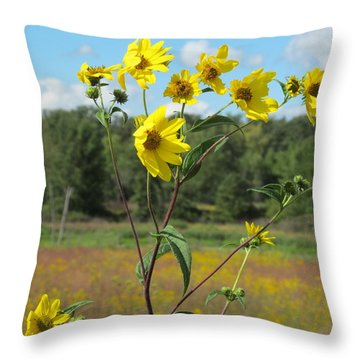 Throw Pillow featuring the photograph Wild Daisies by Tina M Wenger